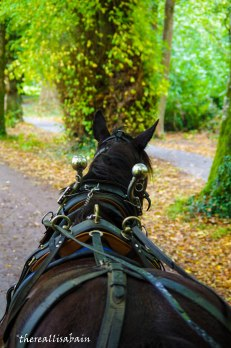 Take a jaunting cart ride through Killarney.